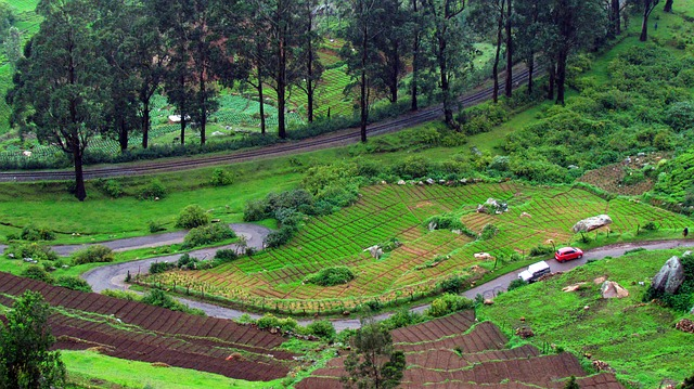 Top 10 places to visit in Ooty